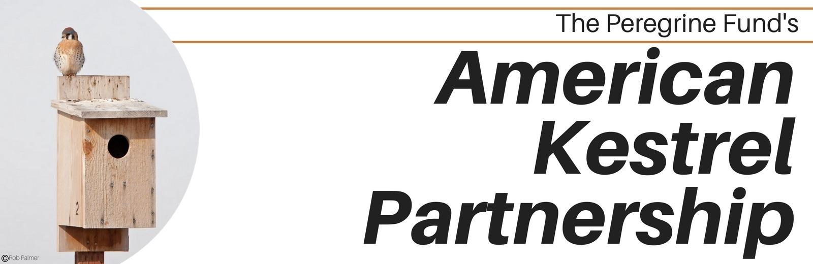 American Kestrel Partnership Store