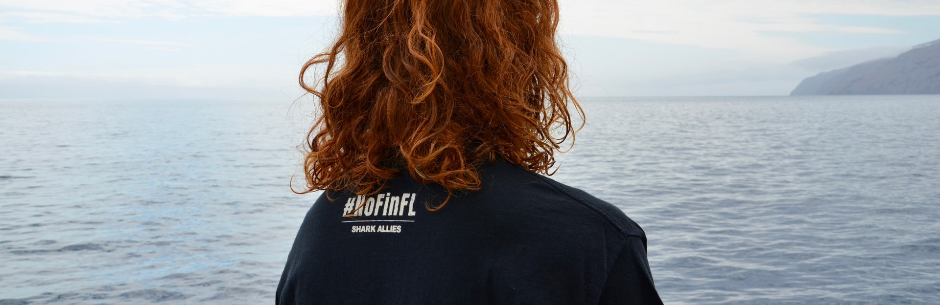 Shark Allies #NoFinFL Store